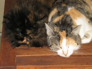 Balkon-Katzencontent