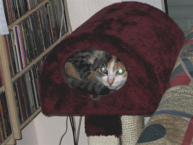 Egal wie klein die Katzenhöhle ist…