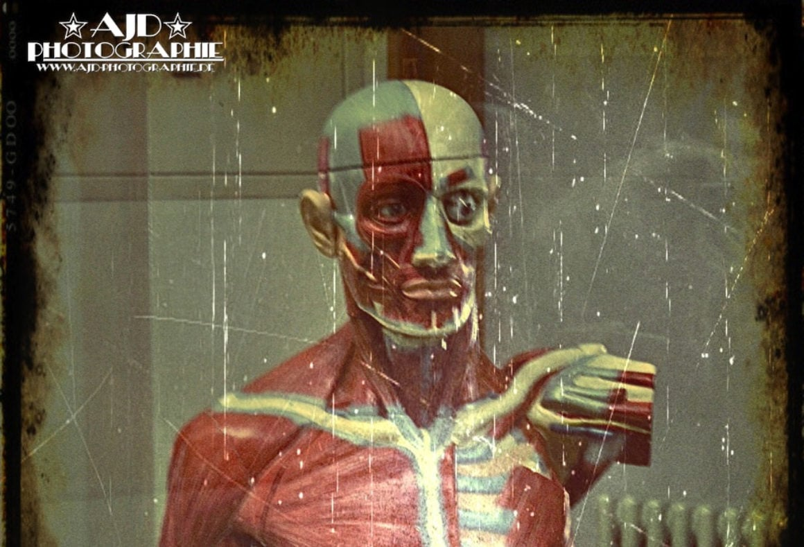 Anatomy in plastic 2