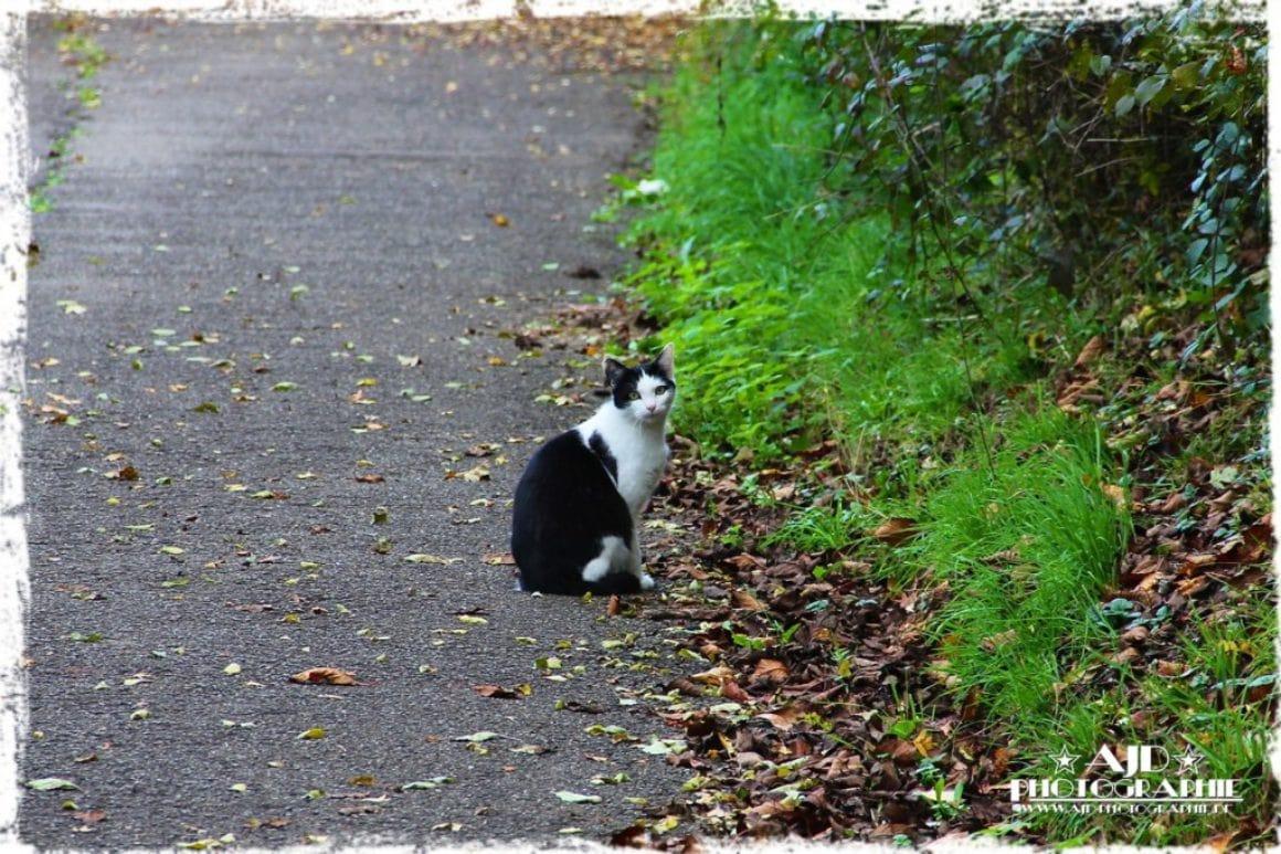 Katzencontent 2011